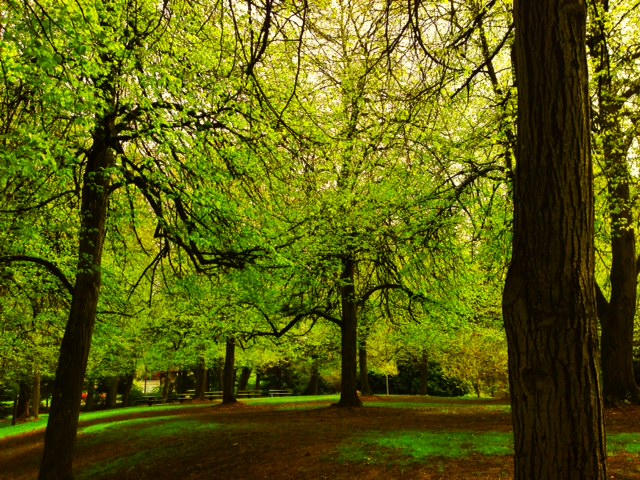 A pathway in Laurelhurst Park, Portland, OR