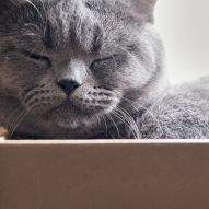 Sleeping cat in a box movers newberg oregon