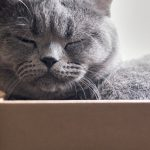 What to consider when moving with a cat